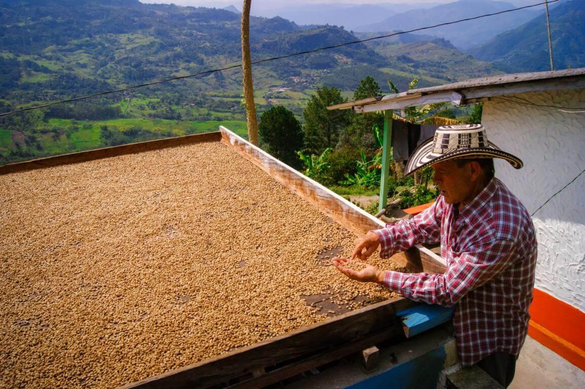 Granos de cafe secados al sol