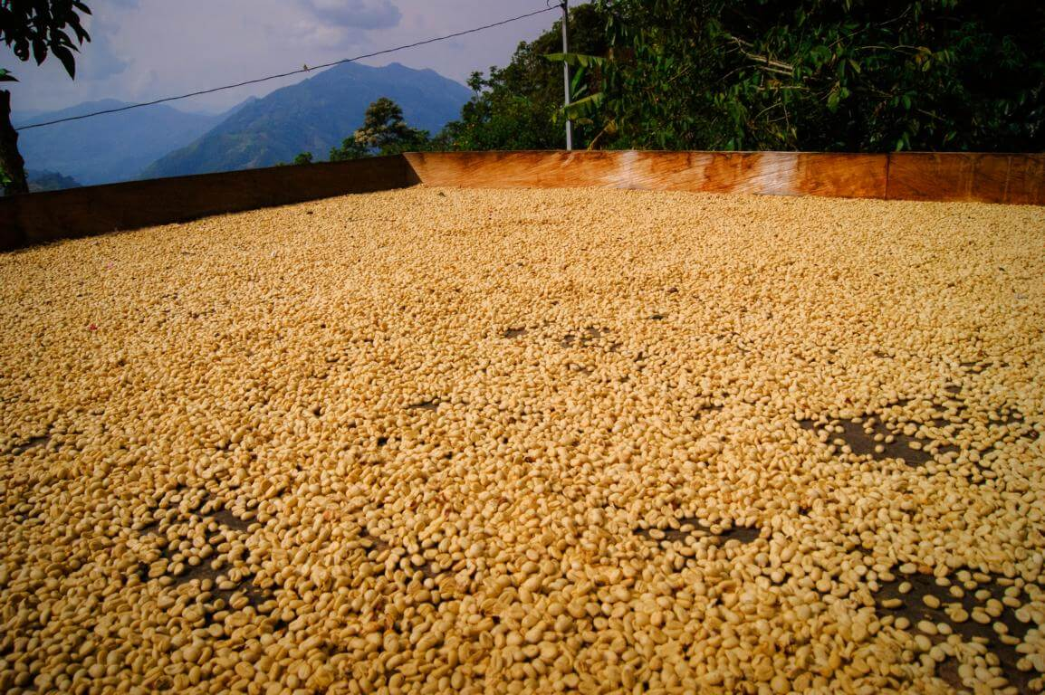 Secado de cafe al sol en la finca de cafe en Colombia